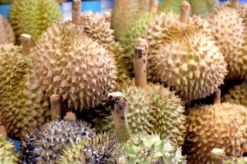 Free stock photo of durian, fresh, fruit, market