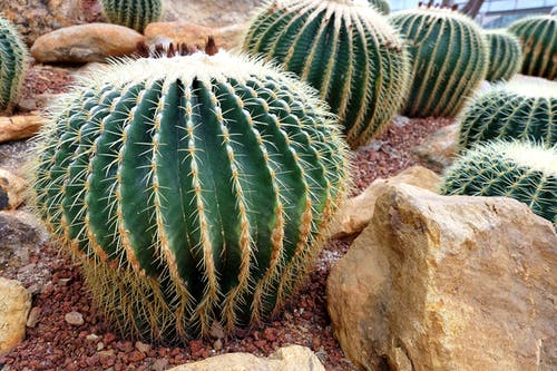 Free stock photo of botanical garden, cactus, rocks
