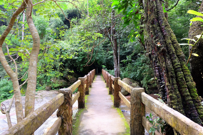 Free stock photo of bridge, forest, nature, treck