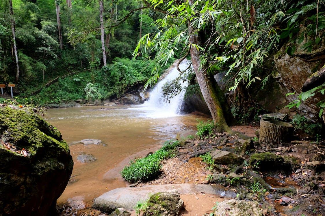 kivet, luonto, metsä