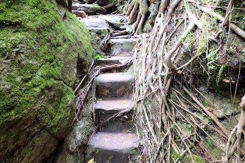 Ilmainen kuvapankkikuva tunnisteilla juuret, kivet, metsä, portaat