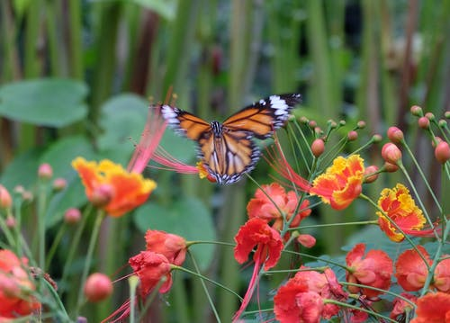 Free stock photo of animal, butterfly, flowers, flying