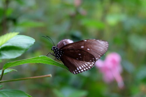 Free stock photo of animal, black, butterfly, nature