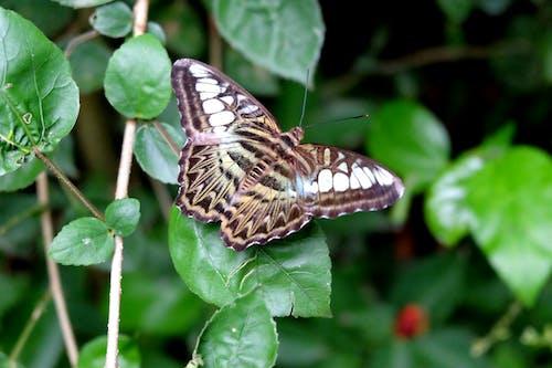 Ilmainen kuvapankkikuva tunnisteilla eläin, luonto, perhonen, villi