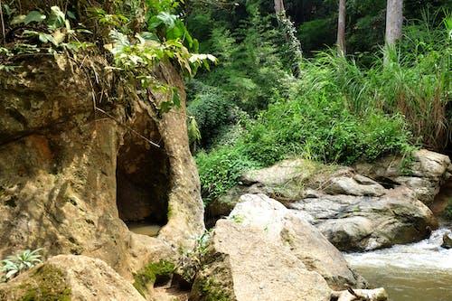 Ilmainen kuvapankkikuva tunnisteilla luola, luonto, vesiputous, vihreä