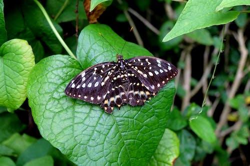 Základová fotografie zdarma na téma černá, motýl, příroda, zvíře