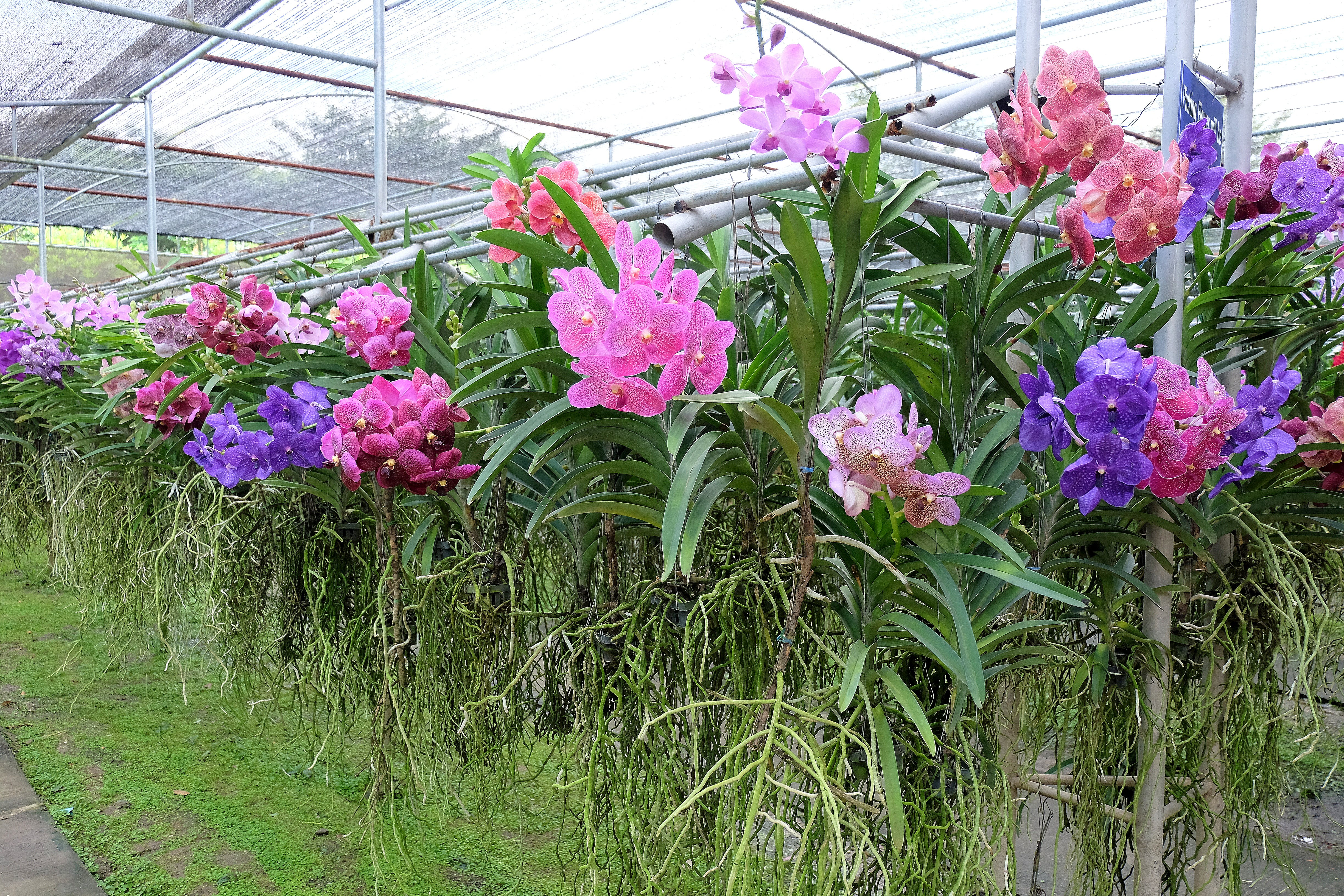 Free stock photo of farm, flowers, orchid, orchids