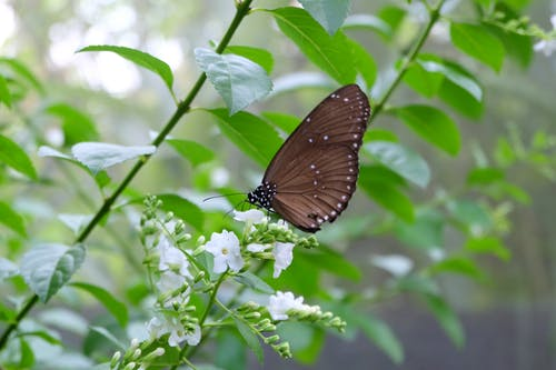 Free stock photo of animal, black, butterfly, flower