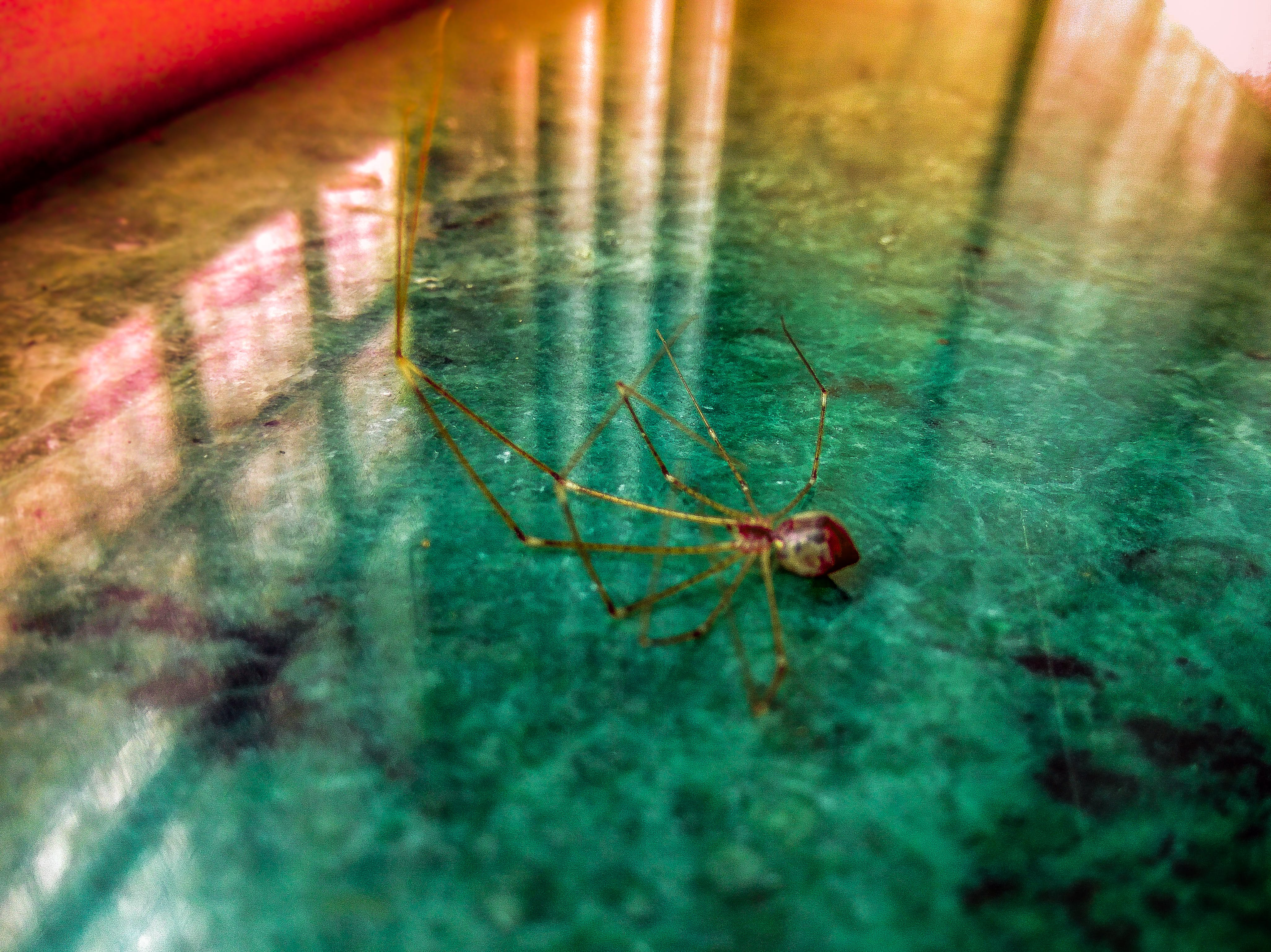 Free stock photo of #spider #rainbow #lookatthosecolors #micro #travel