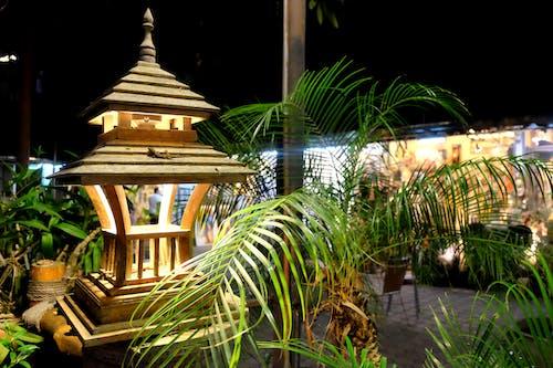 Ilmainen kuvapankkikuva tunnisteilla lamppu, lisko, marketti, puu