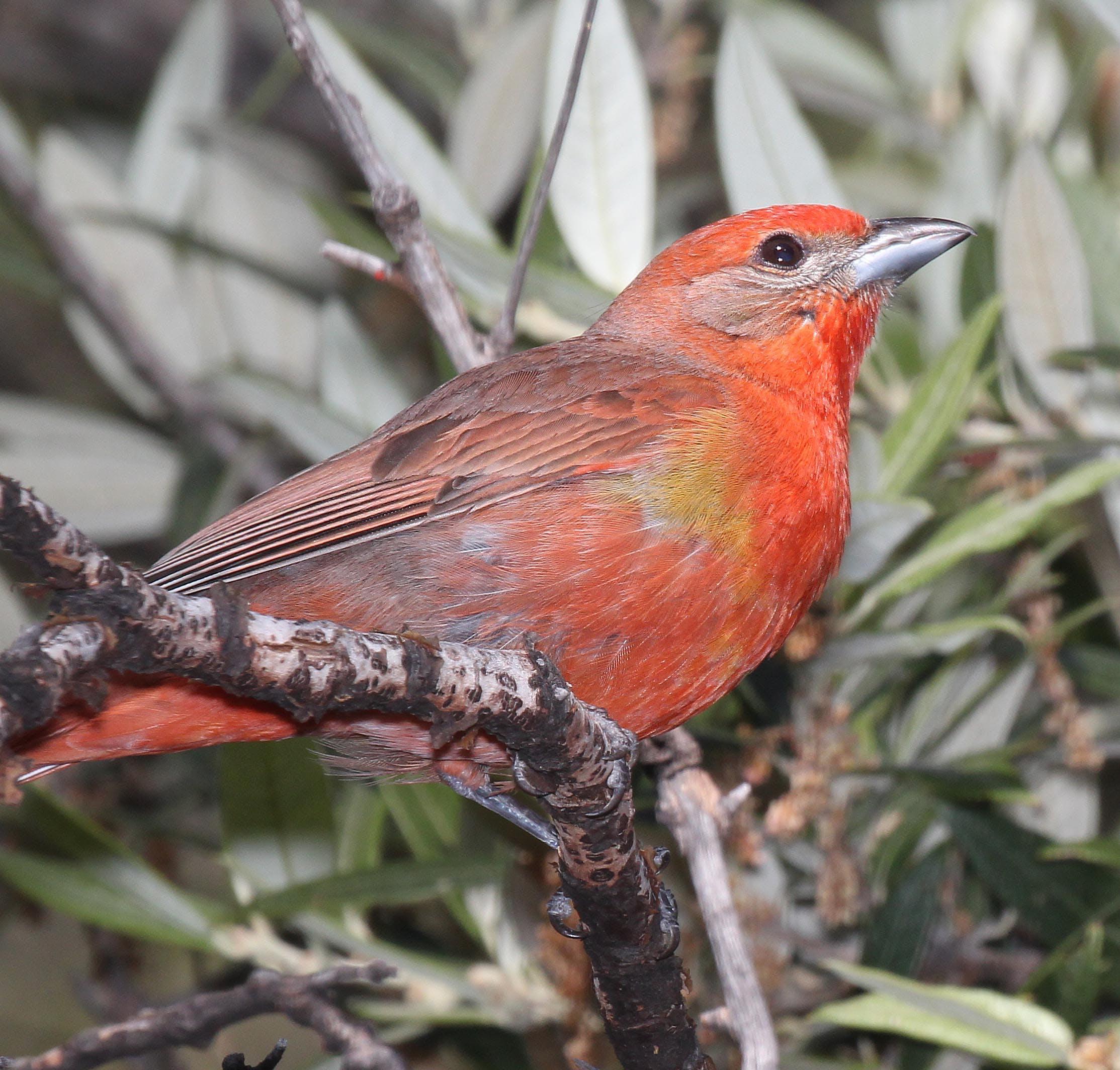Orange Brown and Yellow Long Beaked Bird