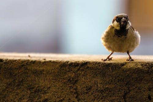 Kostenloses Stock Foto zu naturfotografie, naturleben, vögel beobachten, vogelperspektive