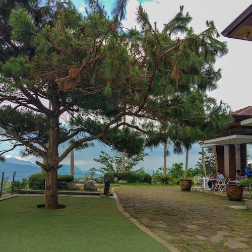 インスタグラム, 写真撮影, 松の木, 自然の無料の写真素材