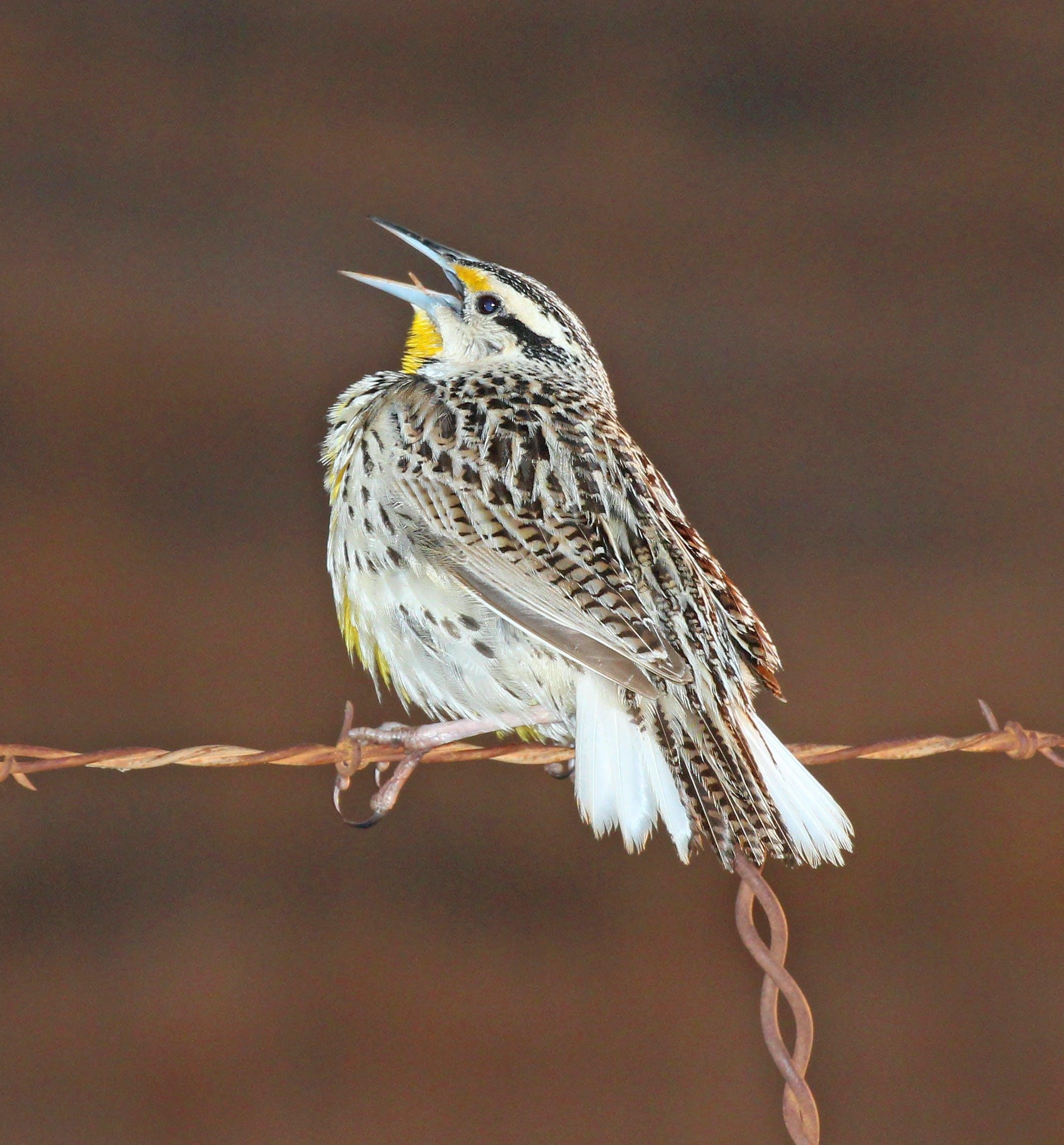 Free stock photo of bird, animal, feather, avian