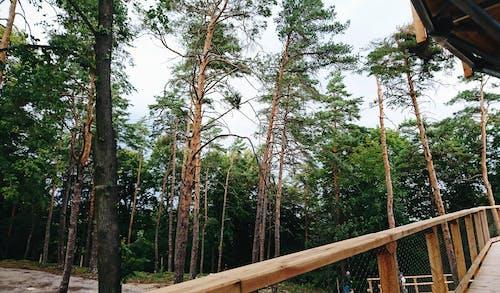 Безкоштовне стокове фото на тему «дерева, Словакія»