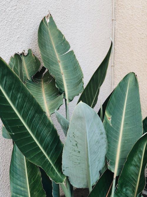 Foto d'estoc gratuïta de creixement, planta
