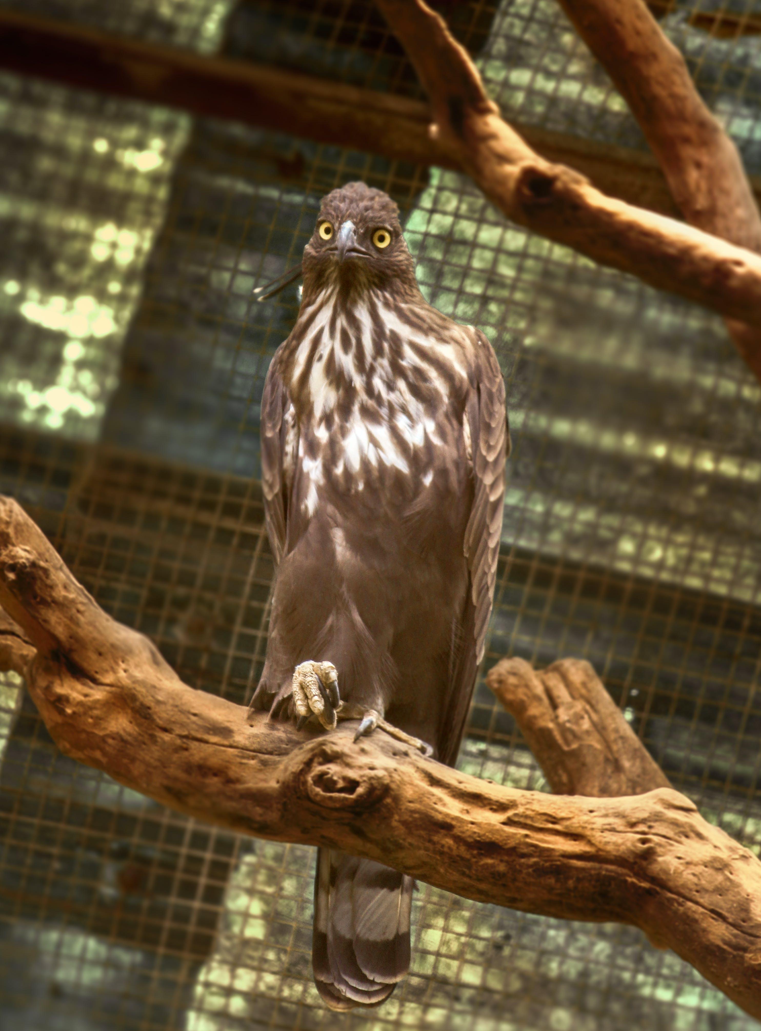 Free stock photo of animal, avian, beak, big eyes