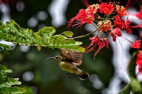 Ilmainen kuvapankkikuva tunnisteilla #nature