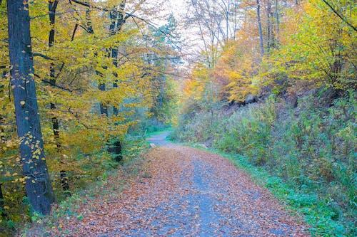 Photos gratuites de forêt