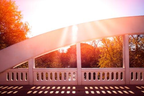 Immagine gratuita di ombra, ponte, sole