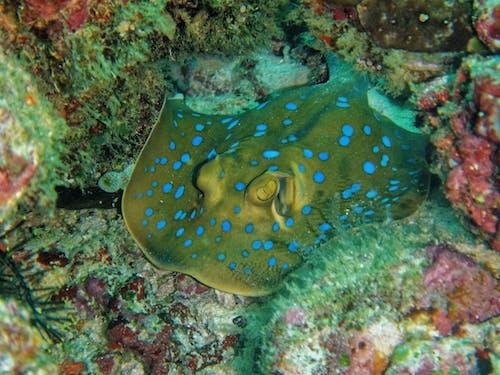 Immagine gratuita di acqua, acquatico, animale, barriera corallina