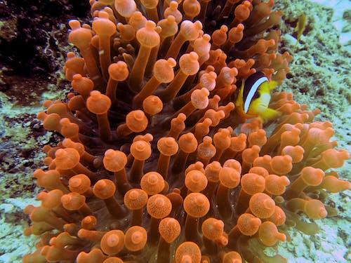 Coral Reef Under Water