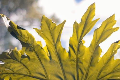 Kostenloses Stock Foto zu grün, hojas, natur, naturaleza