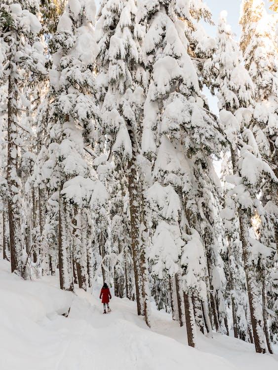 ağaçlar, buz gibi hava, buz tutmuş
