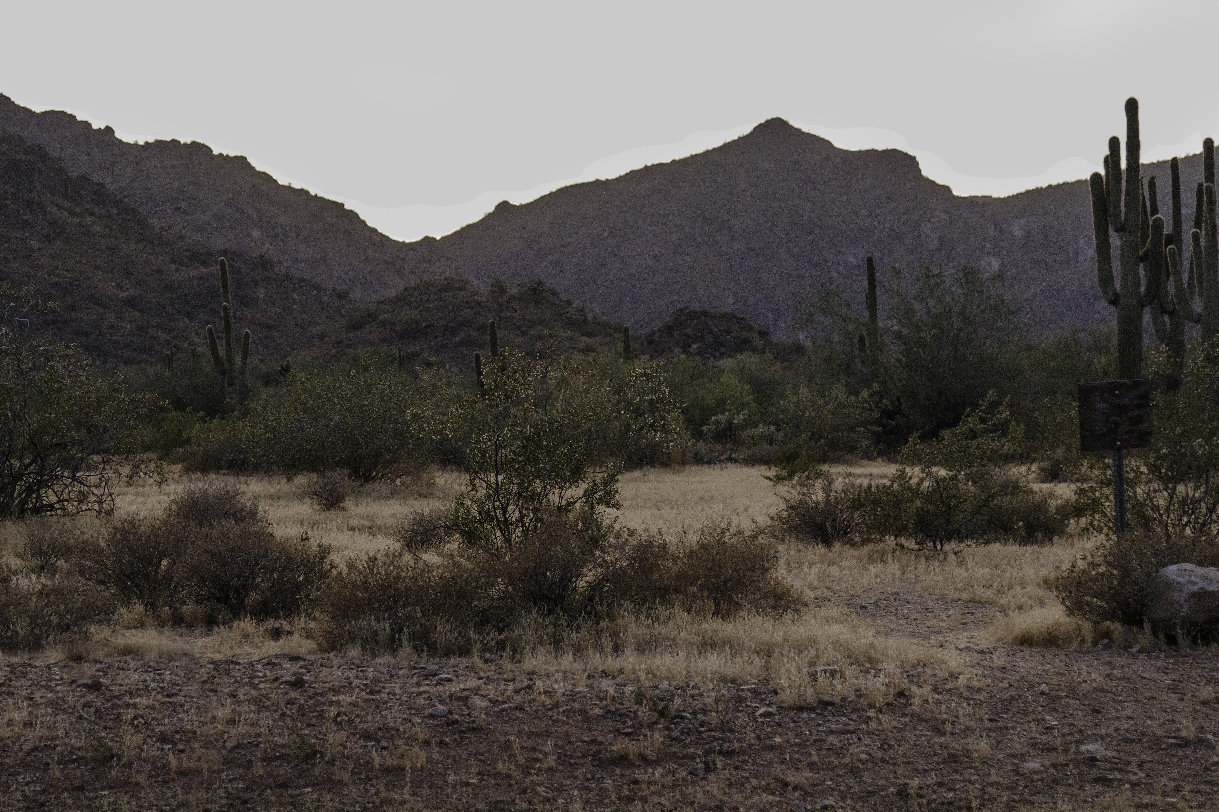 Foto d'estoc gratuïta de arizona, cactus, desert, muntanya
