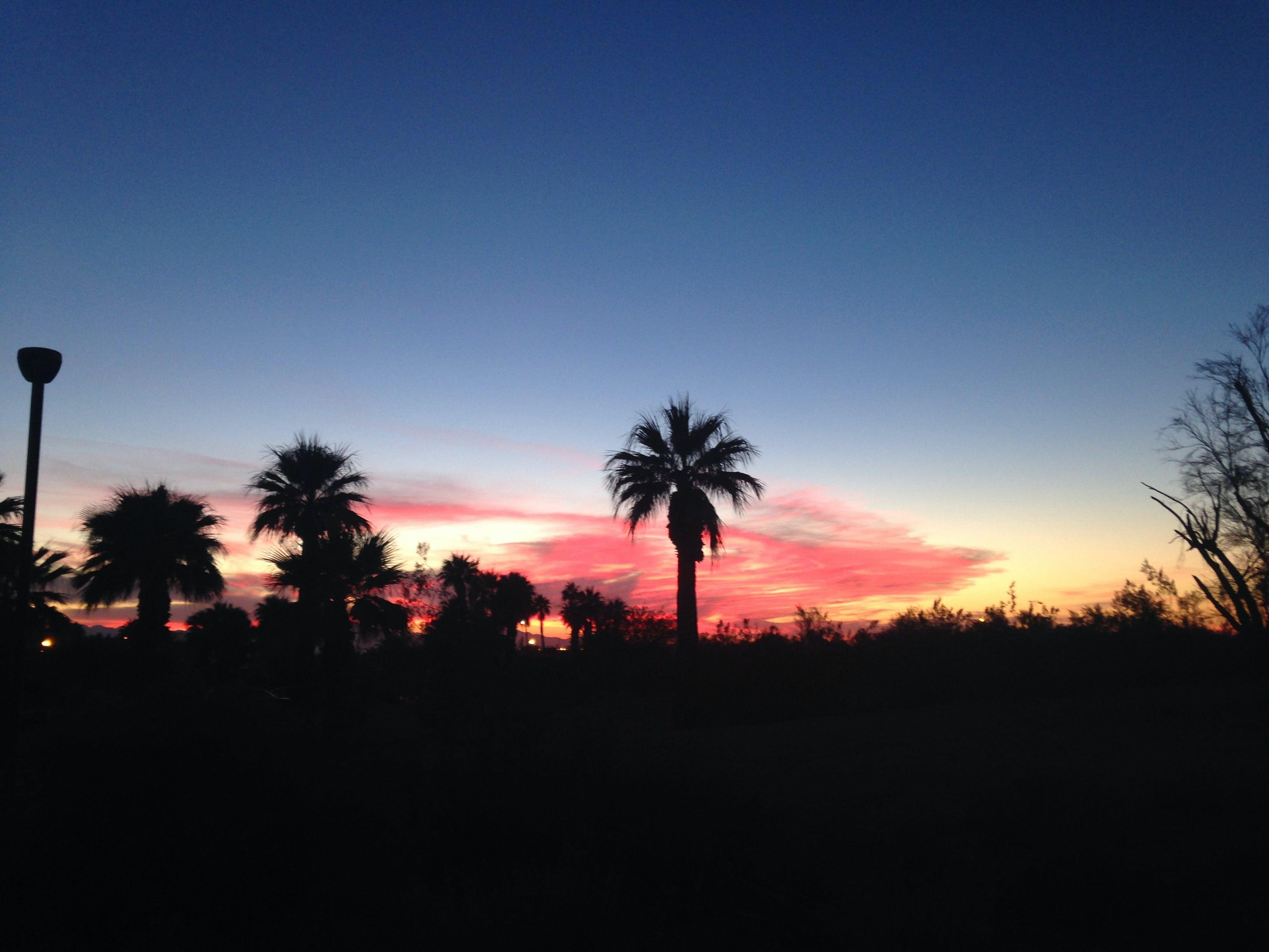 Foto d'estoc gratuïta de capvespre, cel blau, Palmera, silueta urbana