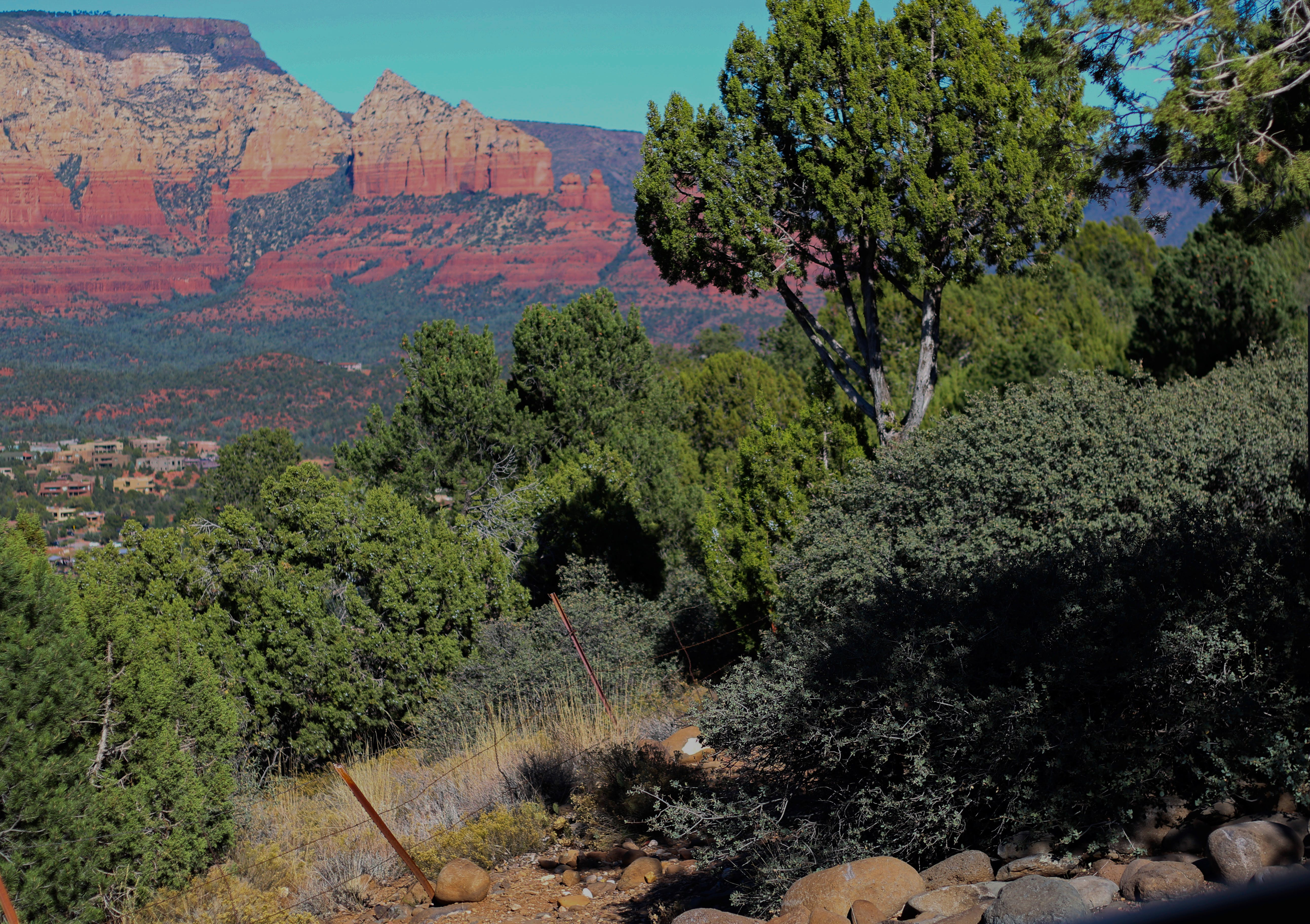 Foto d'estoc gratuïta de arbres, muntanya, roca vermella, sedona