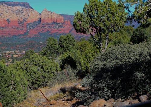 Free stock photo of green, mountain, red rock, sedona