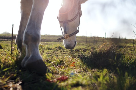 Free stock photo of grass, eat, horse