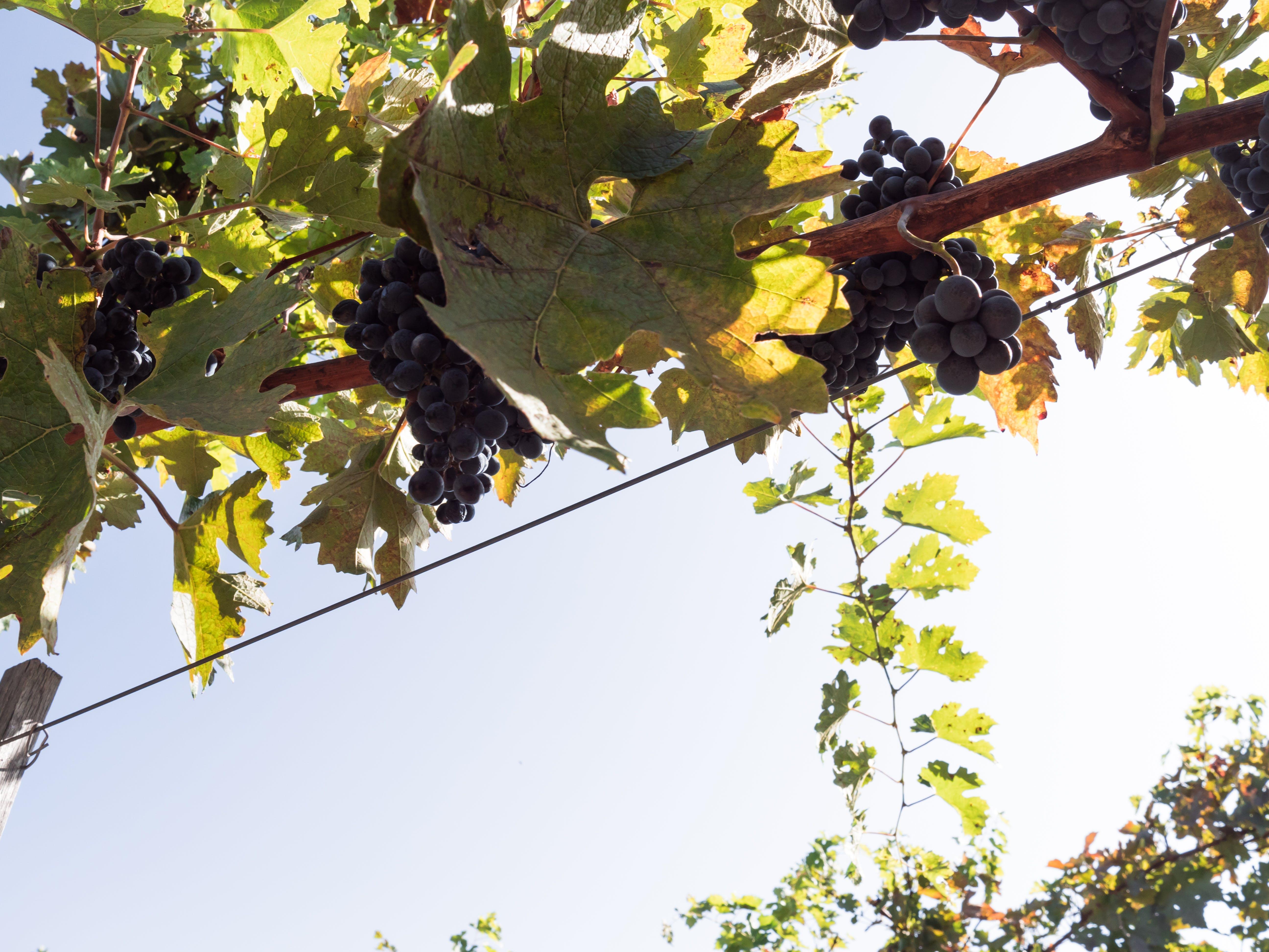 Free stock photo of autumn, autumn colors, autumn leaf, domeniile blaga