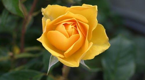 Darmowe zdjęcie z galerii z flora, kwiat, kwiatowy, kwitnąć