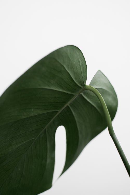 Fotos de stock gratuitas de biología, concentrarse, crecimiento, delicado