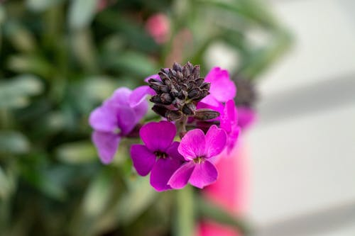 Foto stok gratis bunga, kebun, makro