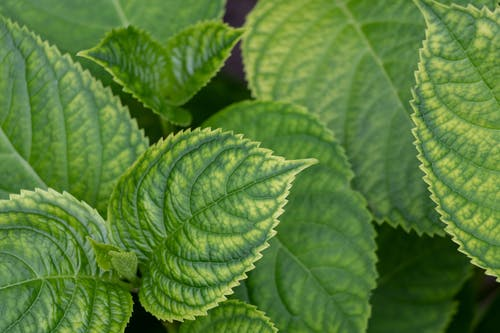 Foto stok gratis daun daun, kebun, makro
