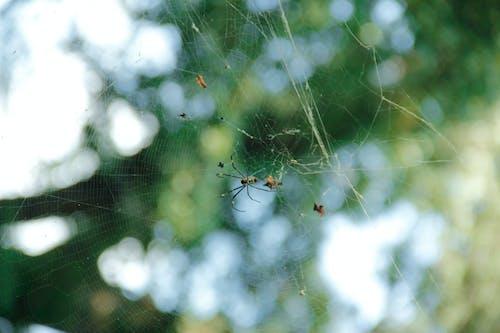 Foto stok gratis laba-laba