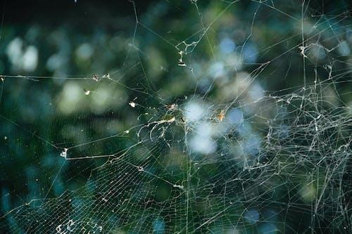 Foto stok gratis jaring laba-laba