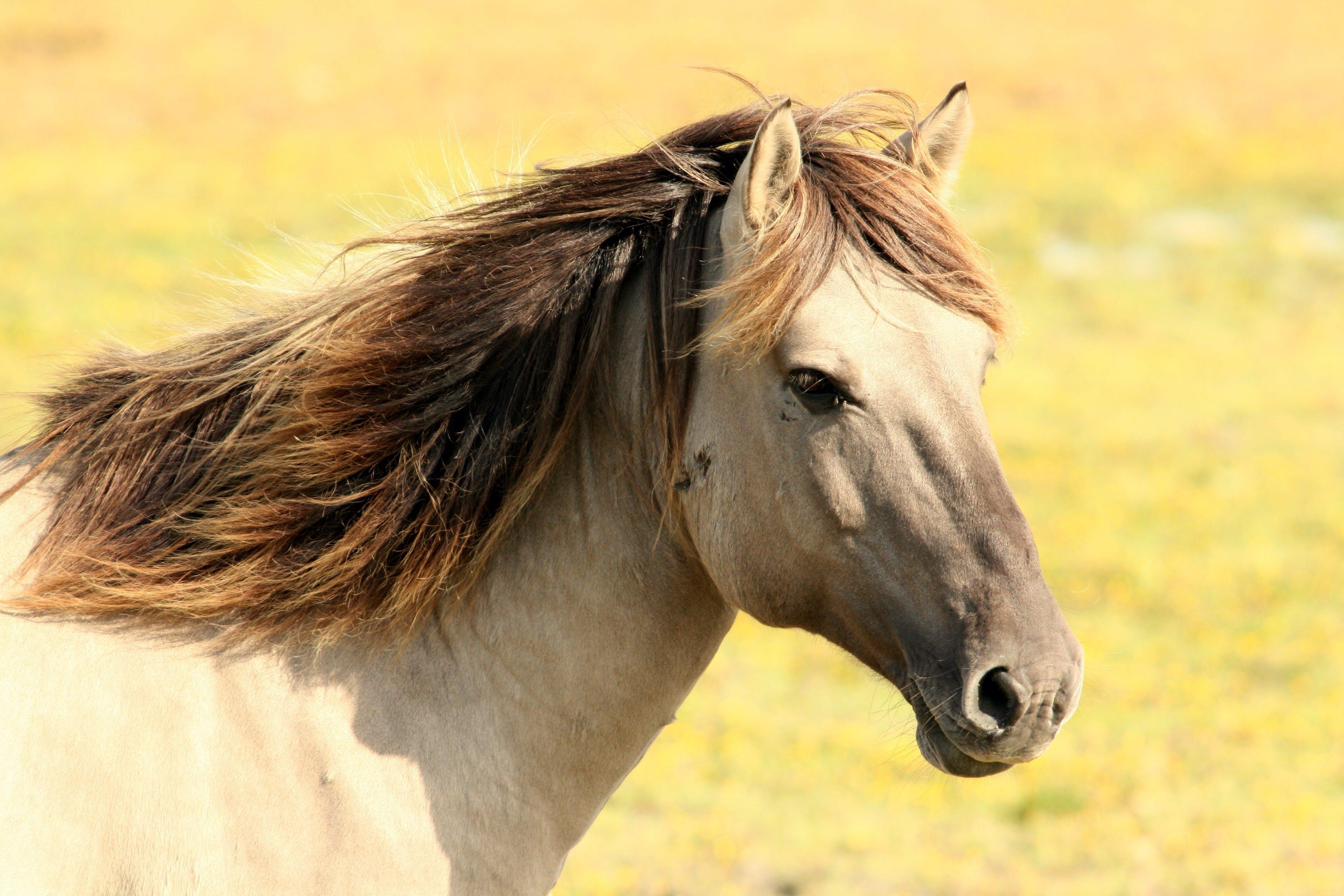 Kostenloses Stock Foto zu pferd, säugetier, tier, weide
