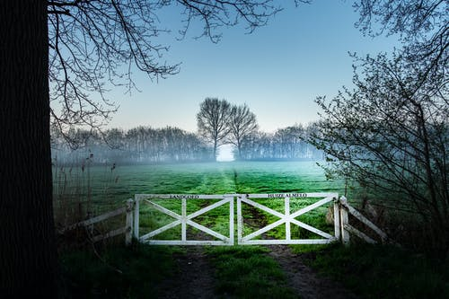 Free stock photo of fence, fog, golden hour, meadow