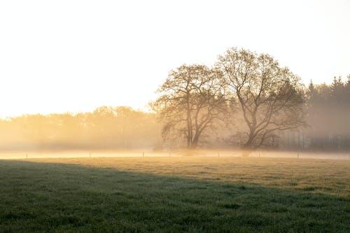 Foto stok gratis jam emas, kabut, padang rumput, pohon