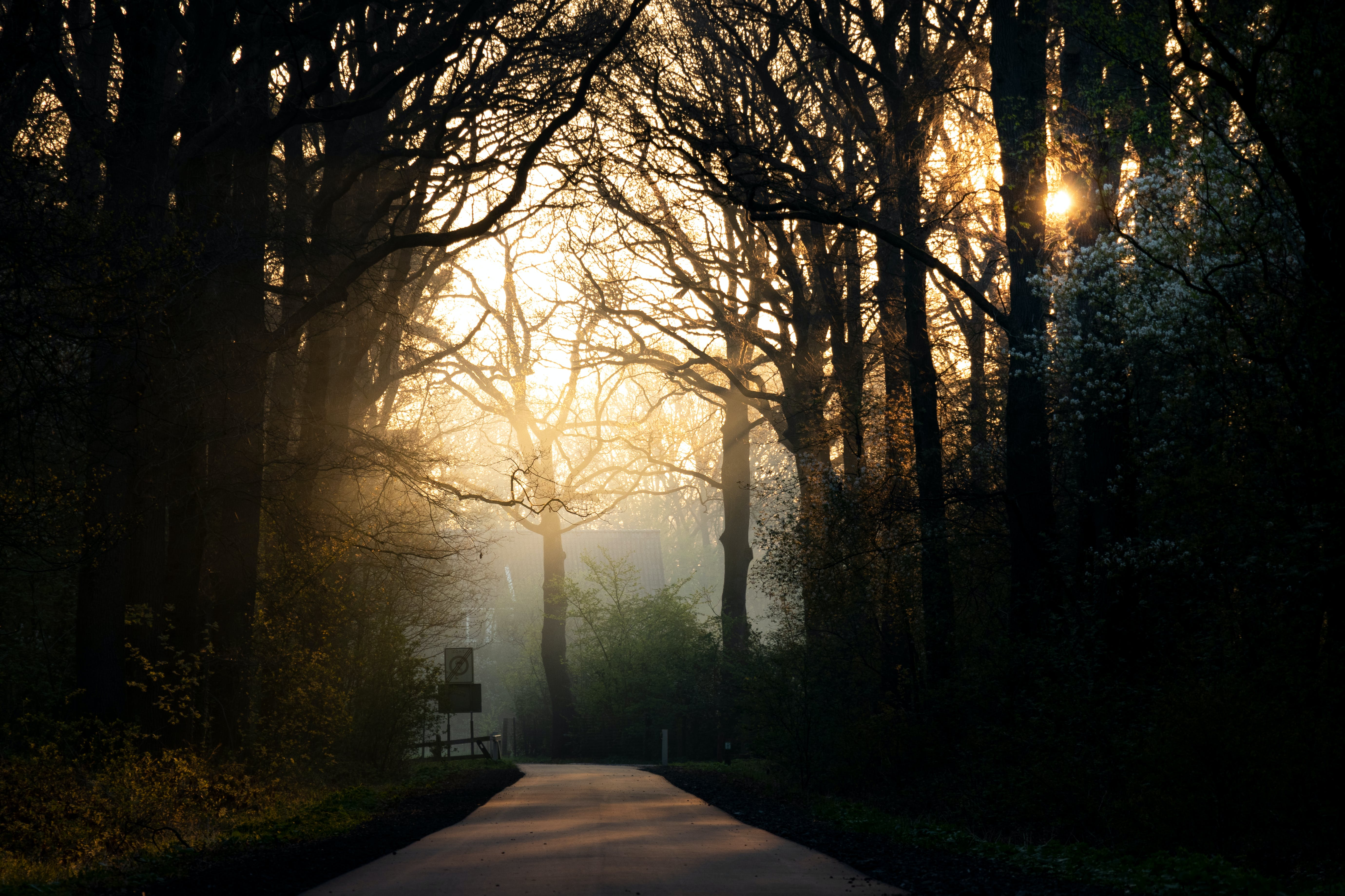 Free stock photo of fog, golden hour, lane, sunbeams