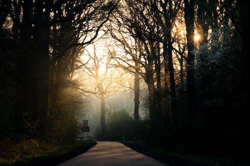 Foto stok gratis jalur, jam emas, kabut, pohon