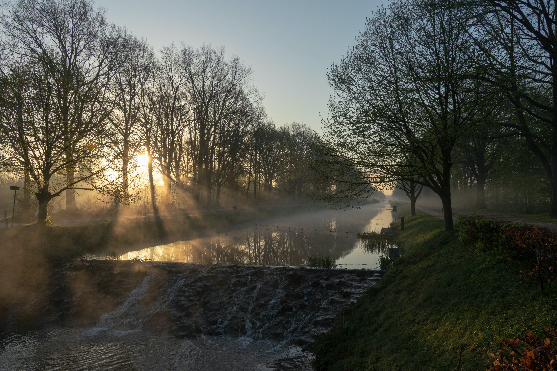 bäume, goldene stunde, kanal