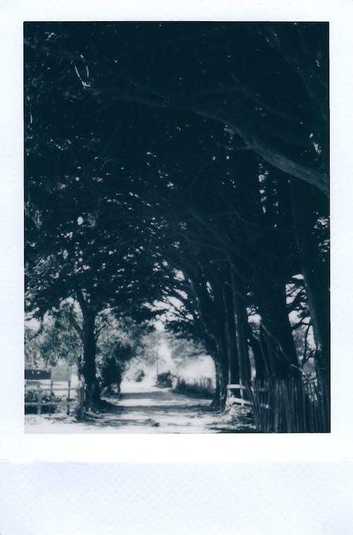 ağaçlar, anılar, anlık, anlık film içeren Ücretsiz stok fotoğraf