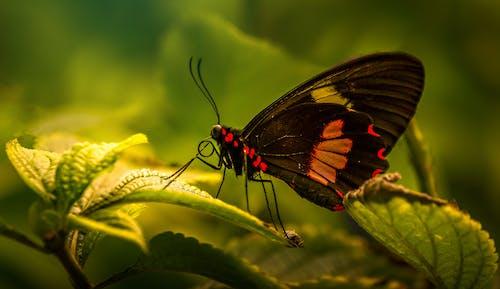 Gratis lagerfoto af sommerfugl