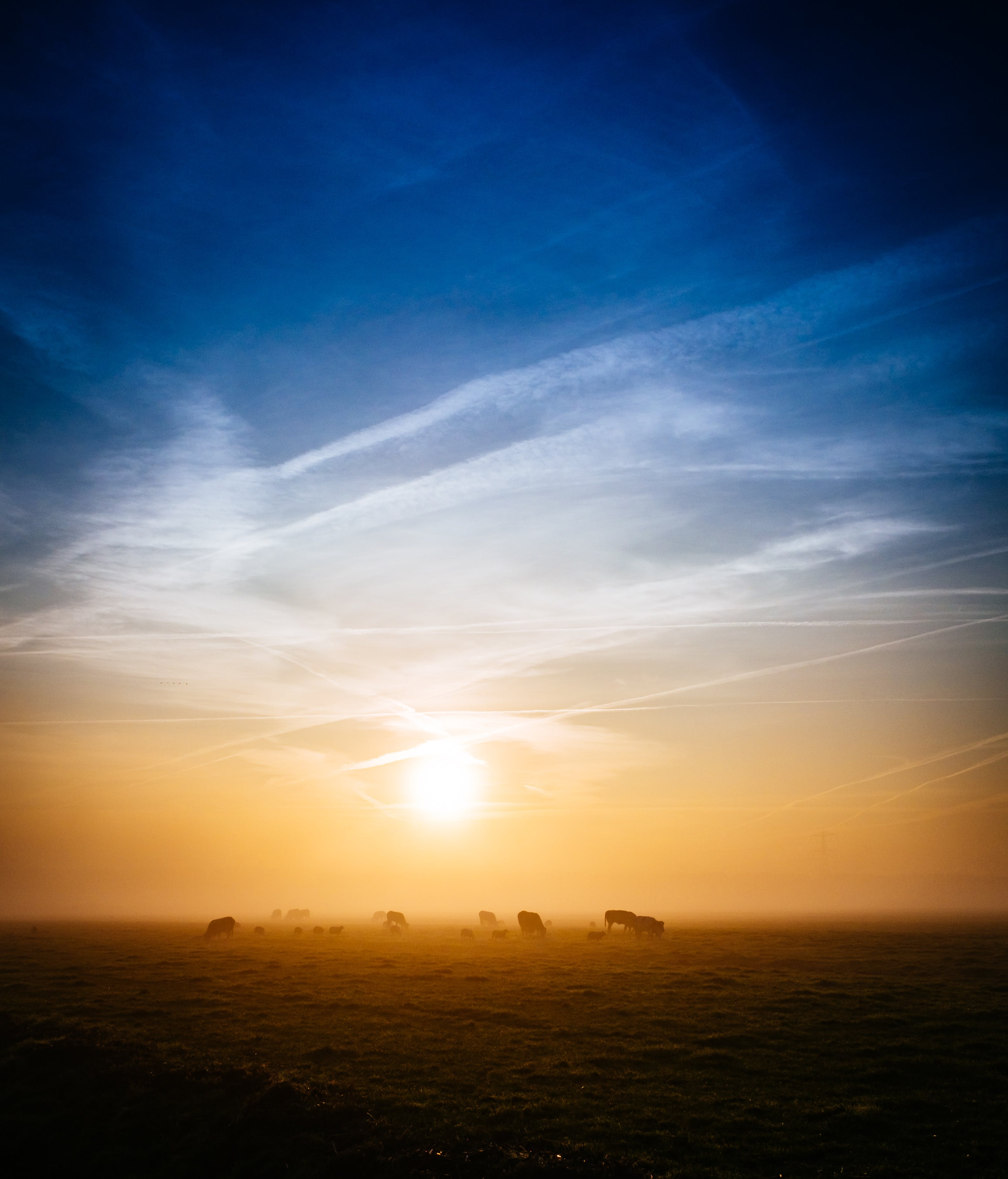 Silhouette Photography of Animals on Ground during Golden Hour