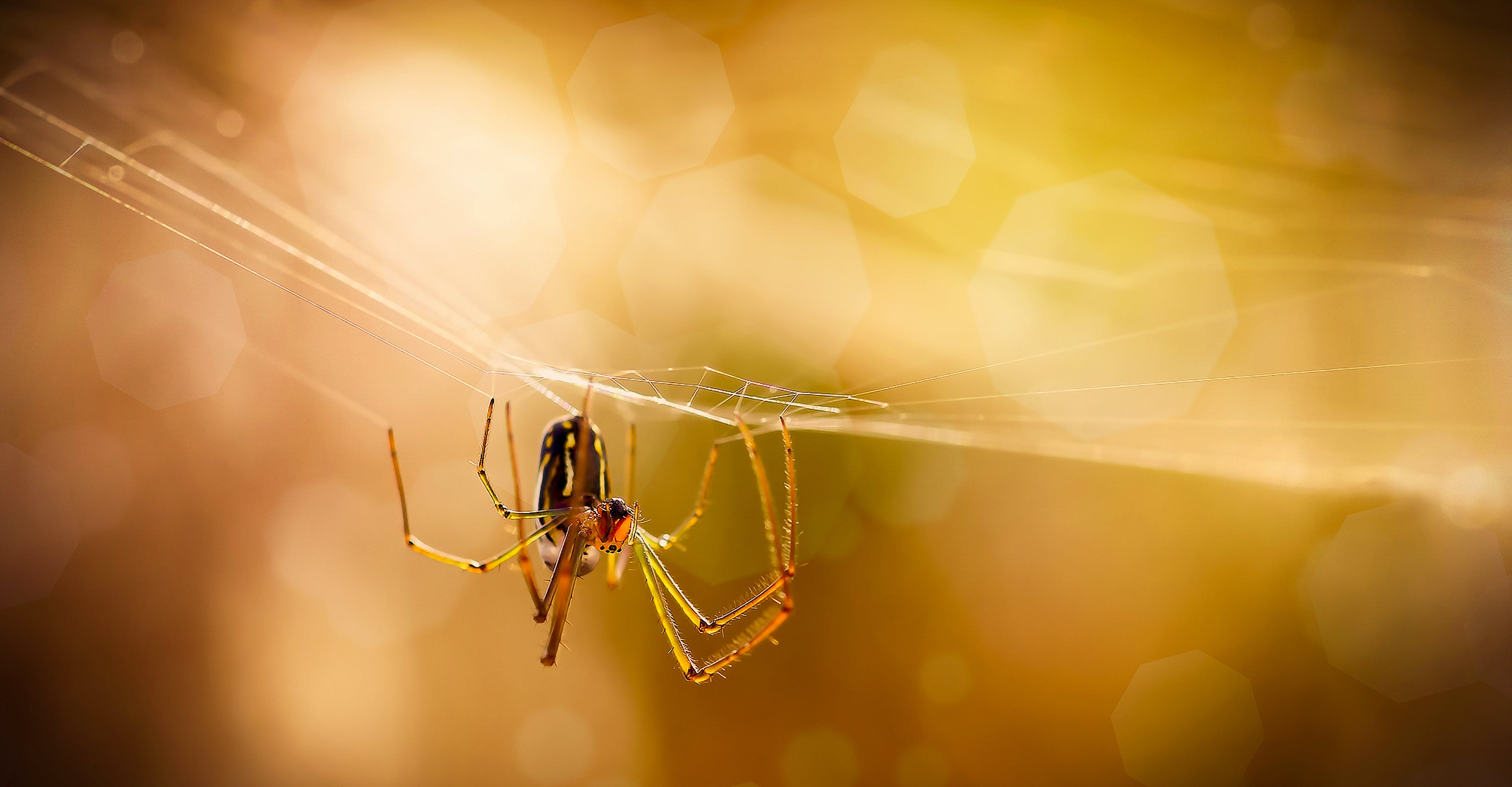 Macro Photography of Brown Spider on Web